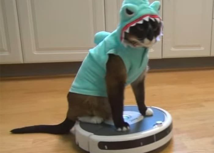 These Roomba vs. Cat Videos Will Totally Make Your Day ... - photo#35